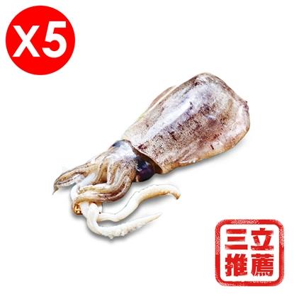 【濱海奇䱲】菲律賓進口野生巨大活凍天使軟絲(5隻入)-電