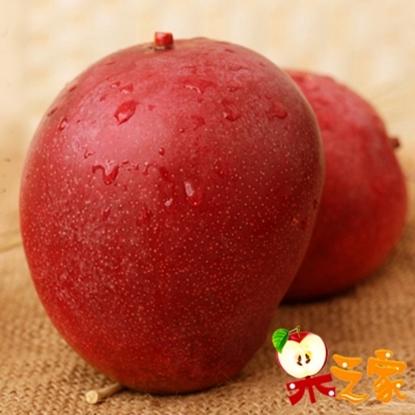 圖片 【果之家】台南玉井AA級愛文芒果10斤(約15-20顆入)