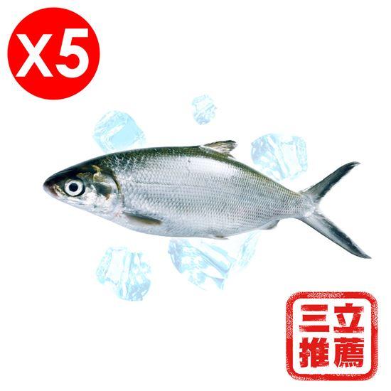 圖片 【微晶冷凍】整尾手工去刺虱目魚組-電