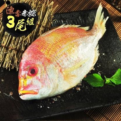 圖片 【漁季】赤?魚300GX3尾(小組)-電