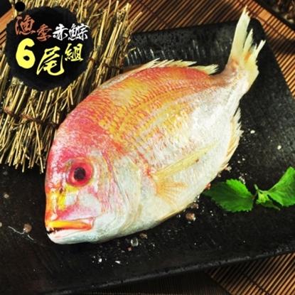 圖片 【漁季】赤?魚300GX6尾(大組)-電