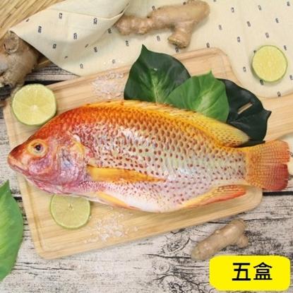 圖片 【鱻來厚道】海紅鯛 (每尾一包/500G) /五入優惠組-電