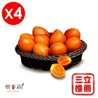圖片 【草地狀元】春霖山園 無毒栽種 (黃金樹蕃茄)鮮果4盒組(600G/盒)-電
