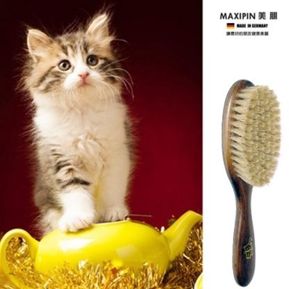 圖片 德國MAXIPIN美朋 德國製造 FSC 原木天然豚鬃貓咪刷/梳 \