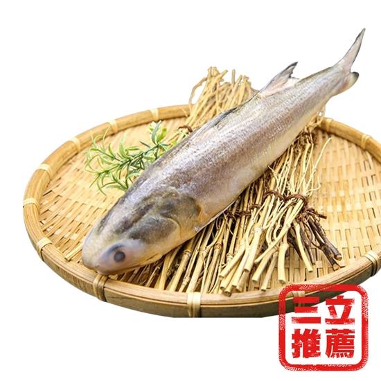 圖片 【Hello ocean】大成 根島野生海午仔魚( 350g/尾 )(4尾組)-電