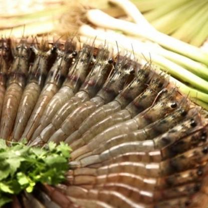 圖片 【蝦覓世界】草地狀元激推中尾(C)生鮮白蝦(24尾/300g)3入優惠組