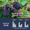 圖片 【歐瑪茉莉】速立新波森莓14包*1盒 +維生素D提升保護