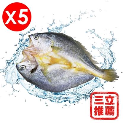 圖片 上禾家  黃魚一夜干-電