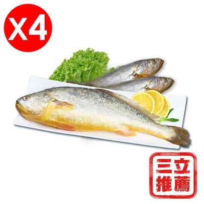 圖片 【上禾家】  野生放養黃魚活力組-電