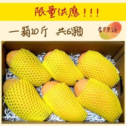 【香芒果鋪】台南 玉井 金煌芒果 50年老欉 新鮮現採 產地直送 水果 禮盒 10斤