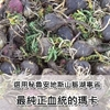 圖片 安地斯雪蔘 祕魯頂級黑瑪卡粉 MACA (2公克x30包)(純素)